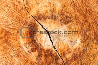 Wood texture with crack in it