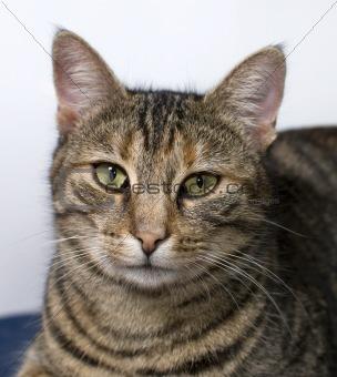 close up of domestic cat