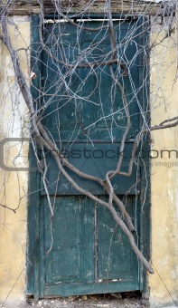 Antique door sealed by roots