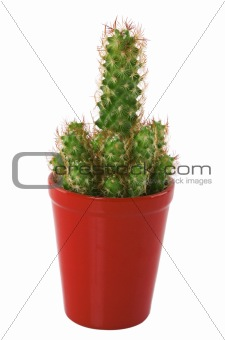 cactus in a red pot