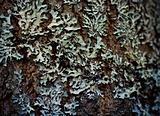 Lichen on wood surface