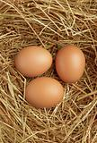 Three eggs in nest
