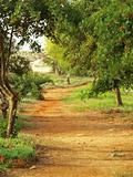 rural Mediterranean landscape