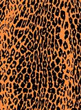leopard fashion animal skin print