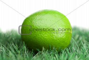 Green lemon on grass