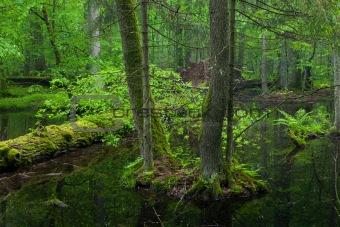 Spring landscape of old forest and broken trees