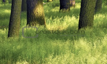 Grass and trunk