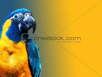africa bird