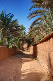 footpath in palm grove