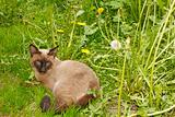 Cat lying on the green grass