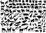 animal of africa collection