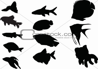 aquarium fishes collection