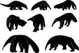 anteaters collection
