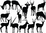 antelopes collection
