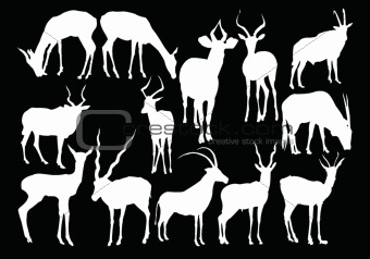 antelopes collection