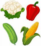 Set of vegetables2