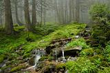 creek in wild wet Carpathian forest