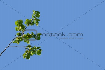 branch on a blue sky background