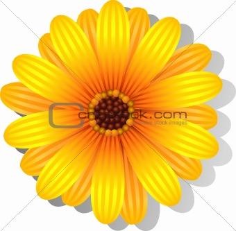 Beautiful yellow Gerber Daisy