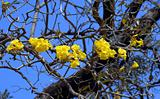 yellow flower on dry tree