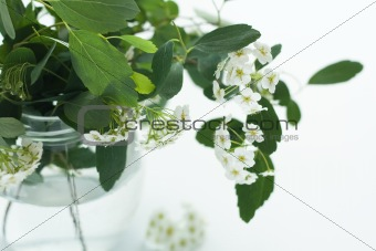 A bouquet of white flowers in a glass vase