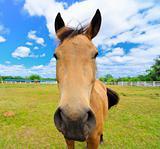 A Horse on a Farm