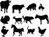 domestic animals illustration collection