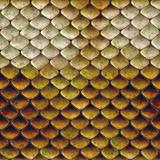 snake scales background