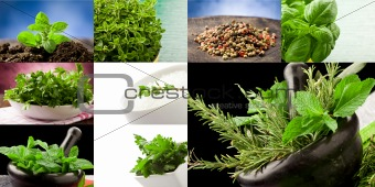 Herbs collage