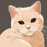 vector view of british lilac cat closeup