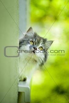 Cute curious cat.