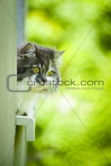 Cute cat.