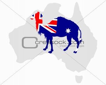 Australian camel
