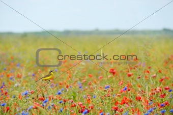 Small songbird in wild flowers