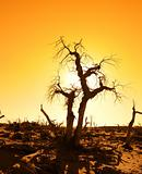 death tree against sunlight over sky background in sunset 