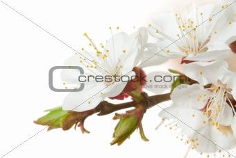 Closeup blossom flower
