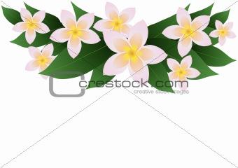 frangipani plumeria border