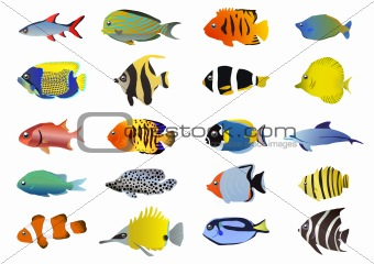 fish-collection
