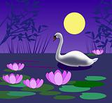 Swan in the Moonlight