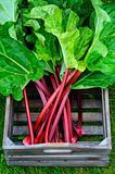 Box with rhubarb