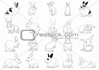 Set of rabbits