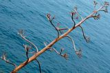 Dry tree against sea