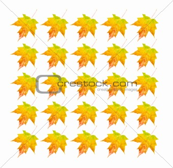 Autumn Leaves - Photo Object