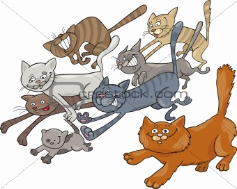Running cats