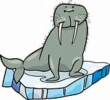 cartoon Walrus on floating ice