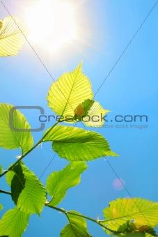 Foliage and sun