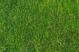 Grass pattern