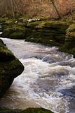 The Strid in strid wood