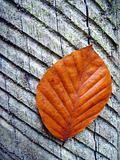 russet leaf on trunk