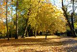 Autumn in an park